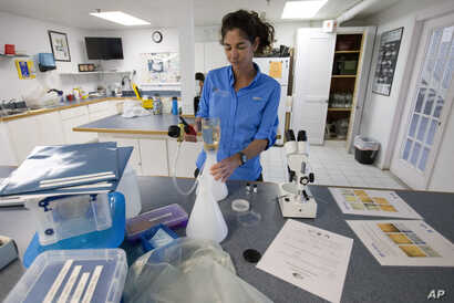 FILE - Sarah Egner, director of curriculum development at Marinelab in Key Largo, Florida, filters out a water sample to check for the presence of microscopic plastics in the water, Feb. 7, 2017.