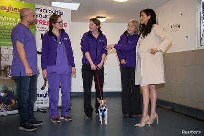 """Meghan, Duchess of Sussex meets """"Minnie"""" during a visit to the animal welfare charity Mayhew in London, Britain, Jan. 16, 2019."""