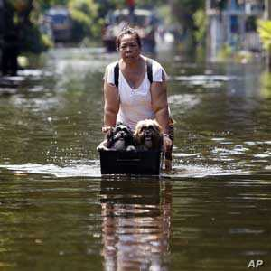 A woman pushes dogs in a makeshift container through a flooded street in Bangkok, Thailand, Oct. 28, 2011.