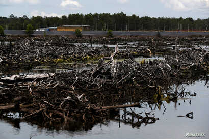 A view of a destroyed mangrove forest outside the Sunlight Seafood shrimp farm in Pitas, Sabah, Malaysia, July 6, 2018.