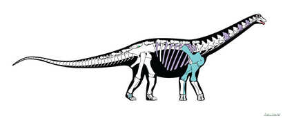 A skeletal reconstruction of the titanosaurian dinosaur Mansourasaurus shahinae from the Late Cretaceous of the Dakhla Oasis, Egypt, is pictured in this undated handout image obtained by Reuters Jan. 29, 2018.