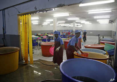 A government raid empties a shrimp shed in Samut Sakhon, Thailand, Nov. 9, 2015. Modern-day slavery often is considered an acceptable business practice in the country's seafood export capital.