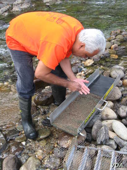 Christo Rodriguez of Rocklin, California, works the shallows of Bear River, looking for gold. (J. Sluicer/VOA)