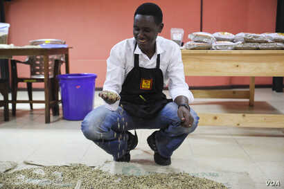 Head of Operations Alfred Mwai runs his hands through coffee beans in Kaldi Africa's warehouse in Lagos, Sept. 5, 2015. (C. Stein/VOA)