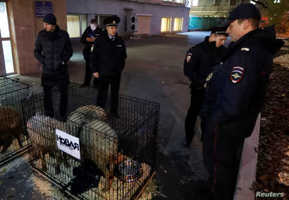 Police officers gather near cages with sheep left in front of the Novaya Gazeta newspaper office in Moscow, Russia, Oct. 29, 2018.
