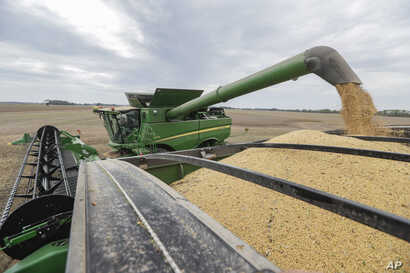 Mike Starkey offloads soybeans from his combine as he harvests his crops in Brownsburg, Indiana, Sept. 21, 2018. The United States is scheduled to slap tariffs on $200 billion in Chinese imports Monday, adding to the more than $50 billion worth that ...
