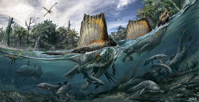 The only known dinosaur adapted to life in water, Spinosaurus swam the rivers of North Africa a hundred million years ago. (Art: Davide Bonadonna, and Oct. edition of National Geographic magazine)
