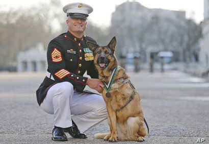 U.S. Gunnery Sergeant Christopher Willingham stands with Lucca, after the German shepherd received the PDSA Dickin Medal, awarded for animal bravery, in London, April 5, 2016.
