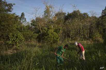 Patrick da Silva, left, and Talles de Almeida work on a reforestation project in the Atlantic Forest region of Silva Jardim, in Brazil's state of Rio de Janeiro, Oct. 10, 2012.