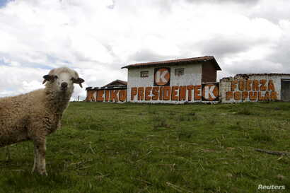 A sign of Peruvian presidential candidate Keiko Fujimori is seen in the district of Piuray, ahead of Sunday's election, in Cuzco, April 9, 2016.