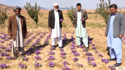Rumi Spice sells saffron produced by Afghan farmers the US military veterans met in Herat province, Afghanistan.