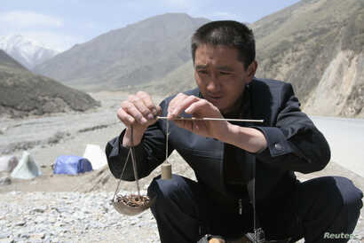 FILE - A local buyer weighs a pile of caterpillar fungus, also known as Cordyceps Sinensis, a traditional Tibetan medicine now popular in China and across the world, Laji mountains of Guide County, west China's Qinghai province.