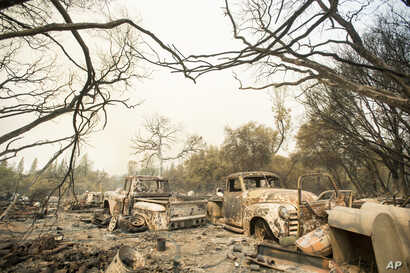 Vintage trucks burned by a wildfire rest in a grove near Oroville, Calif., July 8, 2017. Residents were ordered to evacuate from the rural area as flames climbed tall trees.