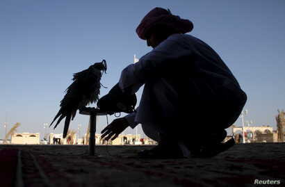 FILE - A Qatari man prepares his falcon to participate in a contest during Qatar International Falcons and Hunting Festival at Sealine desert, Qatar, Jan. 29, 2016. A group of Qatari falconers was kidnapped by armed men in December 2015 during a hunt...