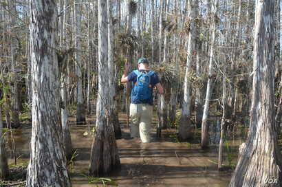 Hiking through the mud on a slough slog is a highlight of a trip to the Everglades.