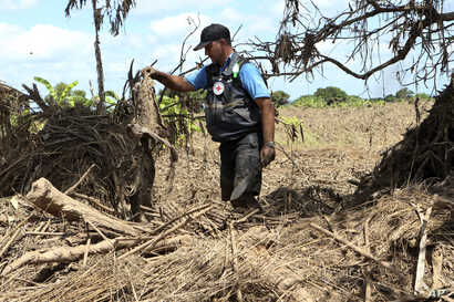 In this April 4, 2019, photo, Stephen Fonseca, a forensics expert who tries to find and name the dead, recovers a piece of clothing during a search for bodies in a field of ruined maize in Magaru, Mozambique.