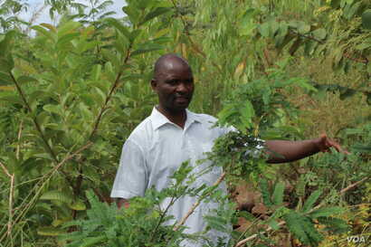 Kenneth Scott in in a forest of trees which communities of Mwambananji village, Malawi, planted to help mitagate the impact of floods.