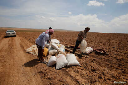 Iraqi farmers work in their fields north of Mosul, Iraq, May 2, 2018.