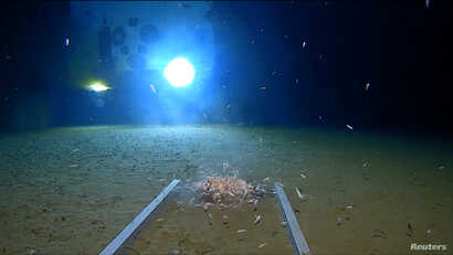 Sea creatures swim around a part of a submersible lander, illuminated by the light of the submarine DSV Limiting Factor, on the floor of the Pacific Ocean's Mariana Trench in an undated still image from video released by the Discovery Channel, May 13...