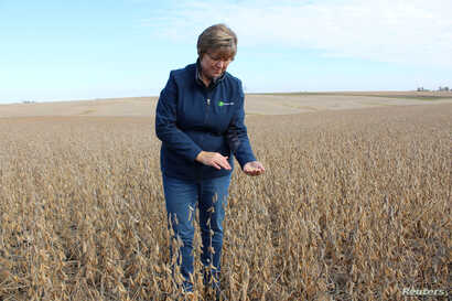 FILE PHOTO: Soybean farmer Pat Swanson examines her soybean crops as farmers struggle with the effects of weather and ongoing…