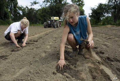 In this Tuesday, June 19, 2012 photo, Maria Darrow, of Falmouth, Maine, right, who will start her sophomore year at Amherst College in the fall, plants strawberries as part of her paid internship at a community farm in Amherst, Mass. The 20-year-old…