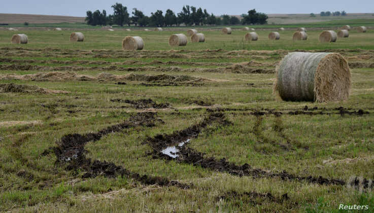 Hay rolls damaged by rain and flood waters that cannot be moved because of muddy conditions lie soaked on a farm after a series of storms across the central plains in Alva, Okla., May 24, 2019.
