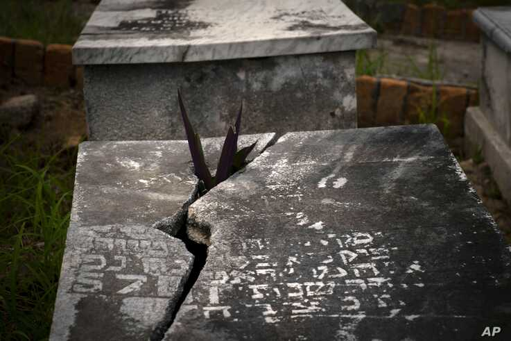 A plant protrudes through the lid of a tomb at the Jewish cemetery in Guanabacoa, eastern Havana, Cuba, June 12, 2019.