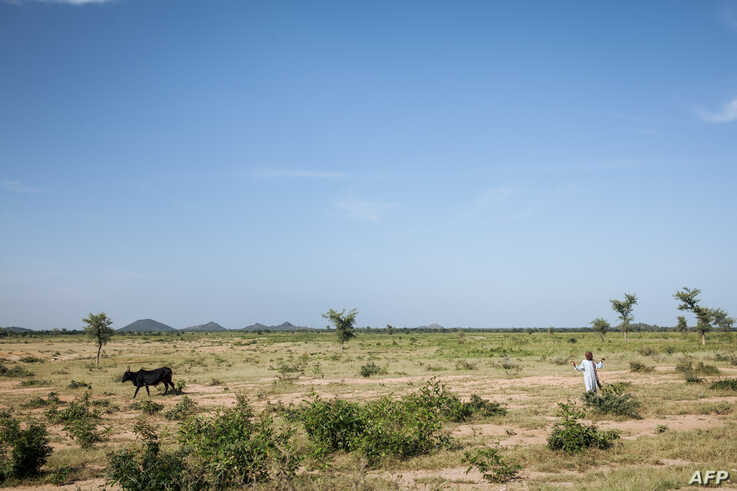 FILE - A child leads cattle on the outskirts of Maroua, Cameroon, Sept. 28, 2018.