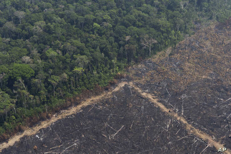 Virgin jungle stands next to an area that was burned recently near Porto Velho, Brazil, Aug. 23, 2019.