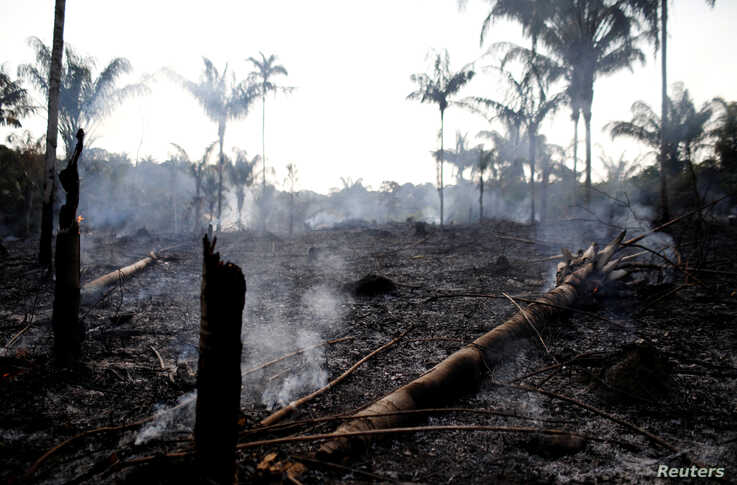 A charred trunk is seen on a tract of Amazon jungle that was recently burned by loggers and farmers in Iranduba, Amazonas state, Brazil, Aug. 20, 2019.