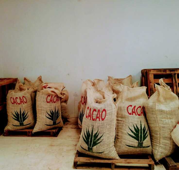 Bags of cacao beans from Mexico