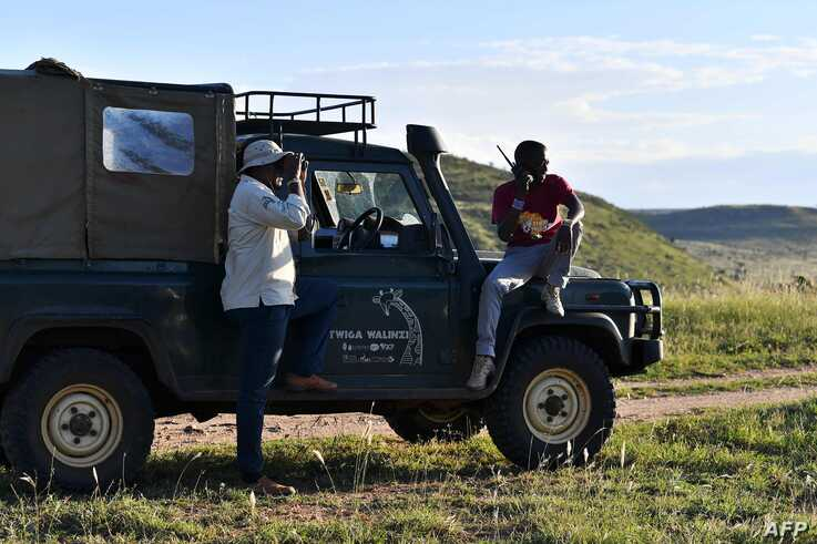Conservationist Symon Masiaine, left, searches for giraffe clusters at Loisaba conservancy in Laikipia, Aug. 5, 2019. In Kenya, as across the wider African continent, the number of the world's tallest mammals have steadily declined in recent decades.