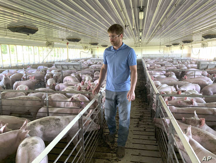 In this Tuesday, June 25, 2019, photo, farmer Matthew Keller walks through one of his pig barns near Kenyon, Minn. When the Trump administration announced a $12 billion aid package for farmers struggling under the financial strain of his trade…