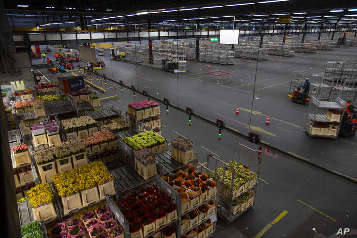 Electric trolleys shift flowers around a warehouse as empty racks are seen at flower auctioneer Royal FloraHolland in Aalsmeer,…