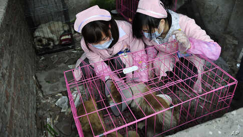 Women volunteers treat dogs after rescuing them at a disused pig farm in Chongqing, China, January 17, 2012. (Reuters)